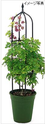 園芸用(植木鉢・プランター)の支柱 ミニオベリスクの販売店