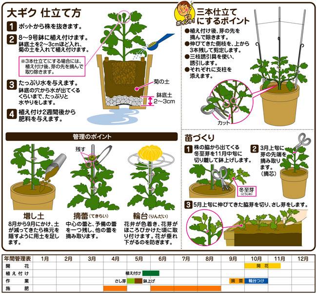 菊の栽培、植替え用培養土(専用土)