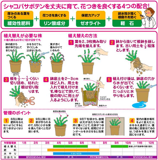 多肉植物専用の培養土(専用用土)