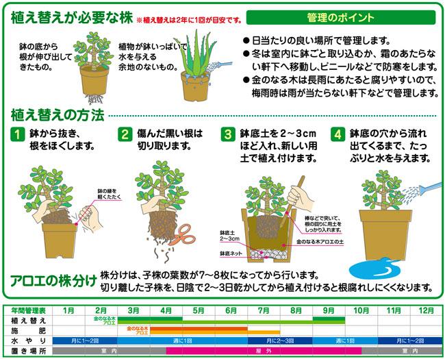 金のなる木・アロエの栽培、植替えに最適な培養土(専用土)