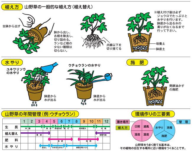 山野草栽培、植え替え専用の培養土(専用土)