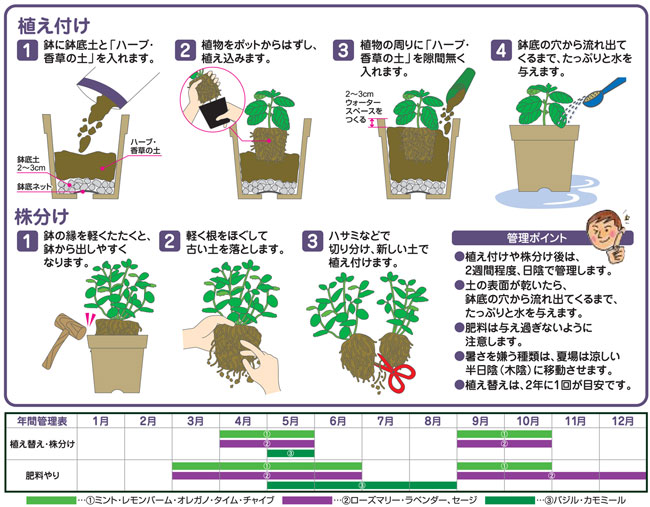ハーブ・香草の専用培養土