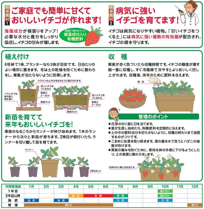 イチゴの家庭菜園の培養土(専用土)