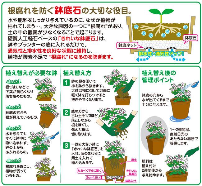 根腐れを防止する鉢底石