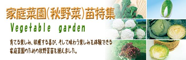 家庭菜園(野菜苗)の販売店【花育通販】秋野菜苗を販売しています。
