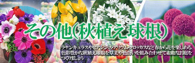 その他の秋植え球根を販売【花育通販】