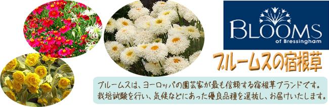 多年草(宿根草)ブランド「Blooms(ブルームス)」の苗を販売【花育通販】