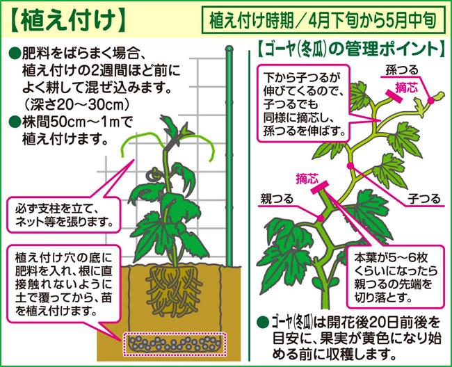 ゴーヤー(ゴーヤ・苦瓜・にがうり)・冬瓜(とうがん、トウガン)など家庭菜園の苗の販売店