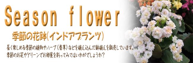 季節の花鉢の販売店【花育通販】季節の植物を植え込んだ鉢植えやハーブ(香草)を植え込んだ鉢植え等を販売しています。