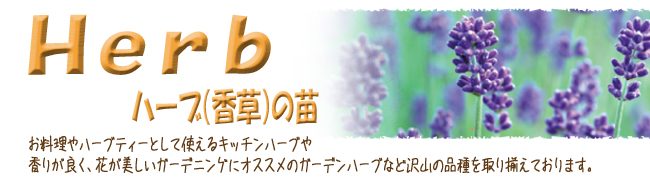 ハーブ(香草)苗の販売店【花育通販】です。