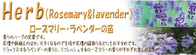 ハーブ(香草)の販売店【花育通販】です。ローズマリーやラベンダーの苗を販売しています。