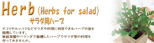 ハーブ(香草)苗の販売店【花育通販】サラダ料理に利用できるハーブの苗を販売しています。