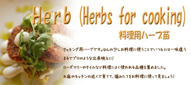 ハーブ(香草)苗の販売店【花育通販】料理用におススメのクッキングハーブ苗を販売しています