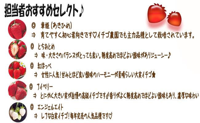 担当者おすすめ苺(イチゴ)の苗を販売しています。【花育通販】