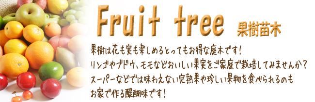 果樹苗木各種を販売しています。【花育通販】