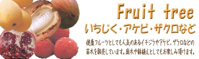 果樹苗木販売店「花育通販」イチジクやアケビ、ザクロなどの健康果樹の苗木を販売しています