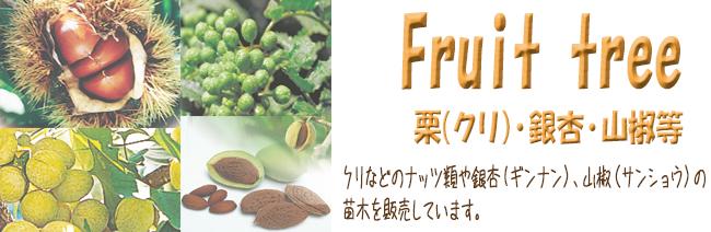 果樹苗木販売店「花育通販」栗(クリ)や銀杏(ギンナン)、山椒(サンショウ)などの苗木を販売しています