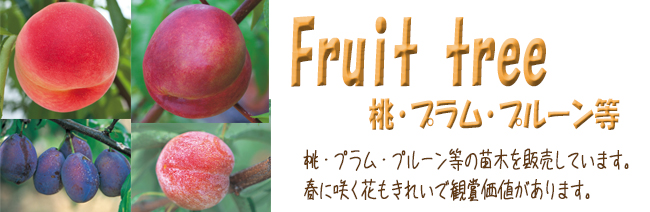 果樹苗木販売店「花育通販」桃(モモ)・すもも(プラム)・プルーン等の苗木を販売しています