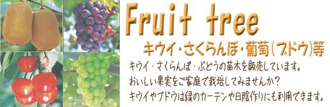 果樹苗木販売店「花育通販」キウイフルーツ・さくらんぼ・葡萄(ブドウ)等の苗木を販売しています