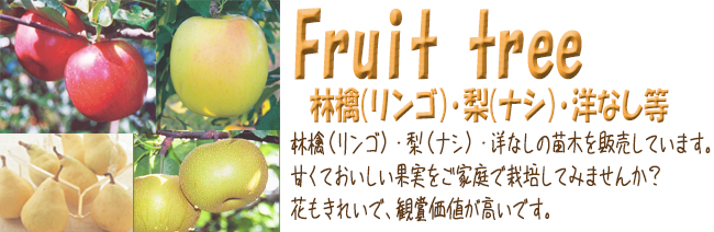 果樹苗木販売店「花育通販」林檎(りんご)や梨(ナシ)、洋ナシ等の苗木を販売しています