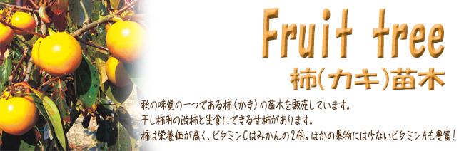 果樹苗木販売店「花育通販」柿(カキ)の苗木を販売しています