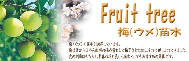 果樹苗木販売店「花育通販」梅(ウメ)の苗木を販売しています