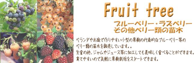 果樹苗木販売店「花育通販」ブルーベリーやラズベリーなどベリー類の苗木を販売しています