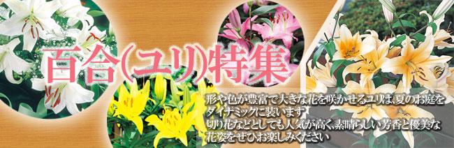 百合(ユリ・ゆり)の球根の販売店【花育通販】