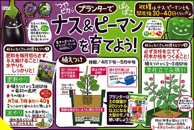 茄子(なす・ナス)、ピーマンなど家庭菜園用の苗を販売