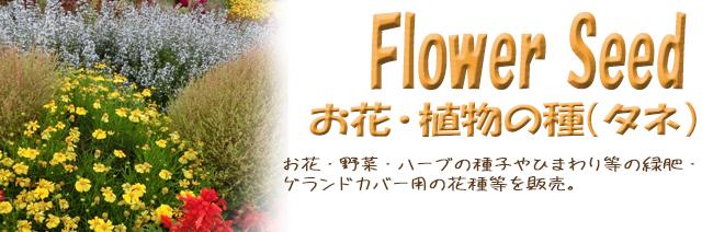 お花・植物の種(タネ)の販売店【花育通販】