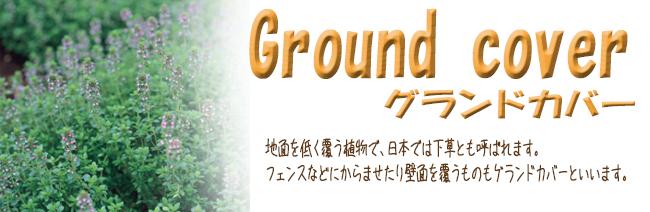 花苗・宿根草・多年草の販売店【花育通販】グラウンドカバープランツを販売しています