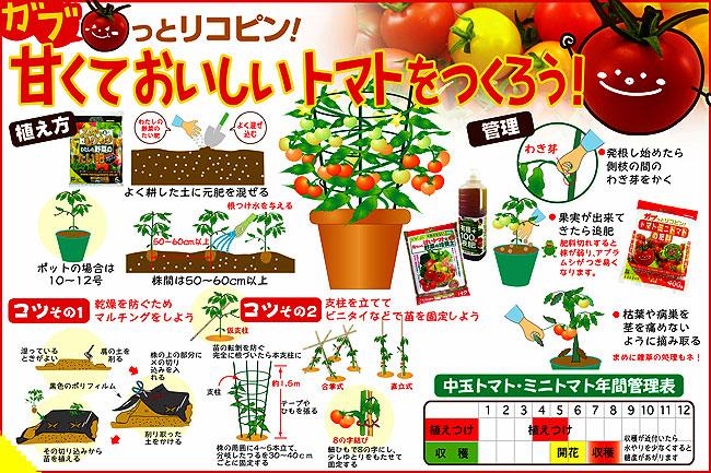 トマト(とまと)、ミニトマトなど家庭菜園用の苗を販売