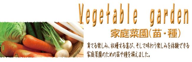 野菜苗と種(タネ)の販売店【花育通販】は家庭菜園(園芸)とベジブロス(野菜食)の専門店