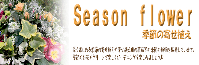 季節の寄せ植えの販売店「花育通販」では、季節の寄せ植えや寄せ植え用の花苗等の季節の植物を販売しています。