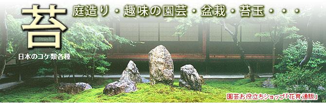 家庭園芸・盆栽用の苔(コケ)