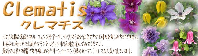 クレマチス(多年草・宿根草)苗の販売店【花育通販】