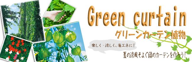 グリーンカーテン用植物の販売店【花育通販】
