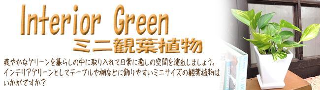 観葉植物の販売店【花育通販】 室内(屋内)で育てる観葉植物を販売