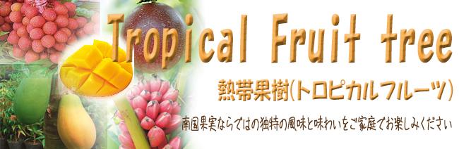 熱帯果樹苗木の販売店【花育通販】では南国果実ならではの独特な風味と味わいが魅力のトロピカルフルーツの苗木を販売しています。