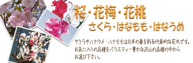 桜(サクラ)・花梅・花桃の苗木の販売店【花育通販】