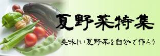 夏野菜特集