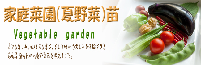 夏野菜の苗を販売しております