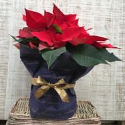 【花育通販】贈り物(プレゼント)におすすめの有料ギフトラッピング・不織布ポットカバーです