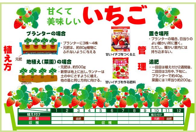 苺(いちご・イチゴ)苗の育て方